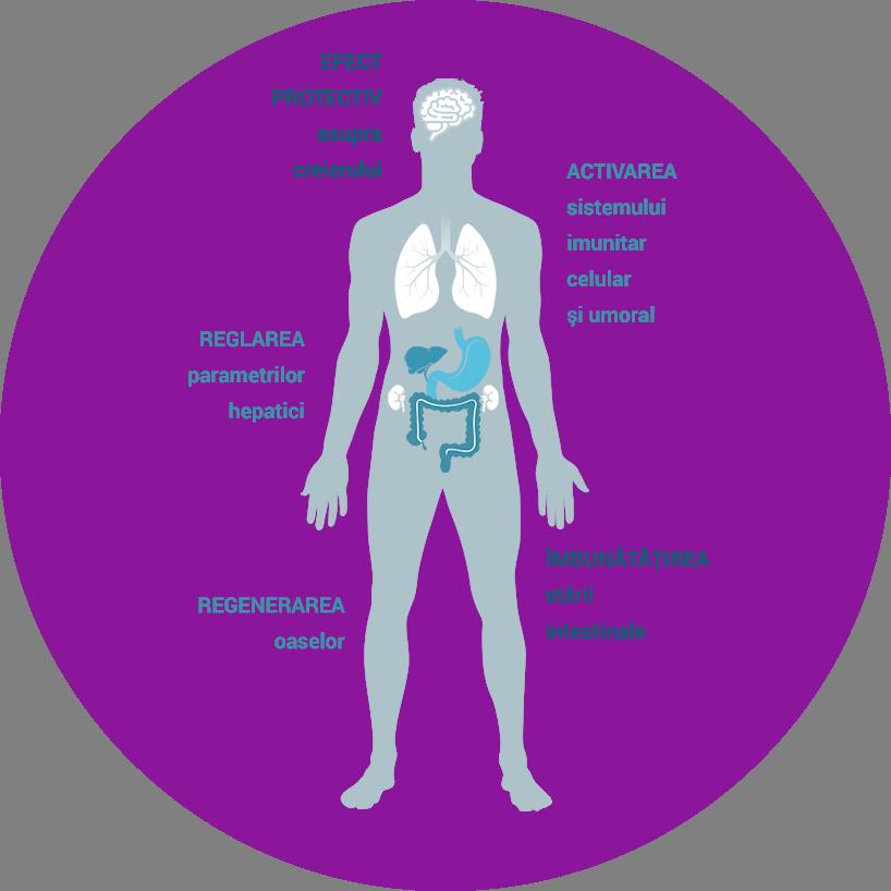 Efectele benefice ale Zeolit Spectrum asupra organismului